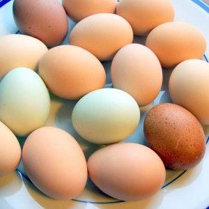 egg free recipes