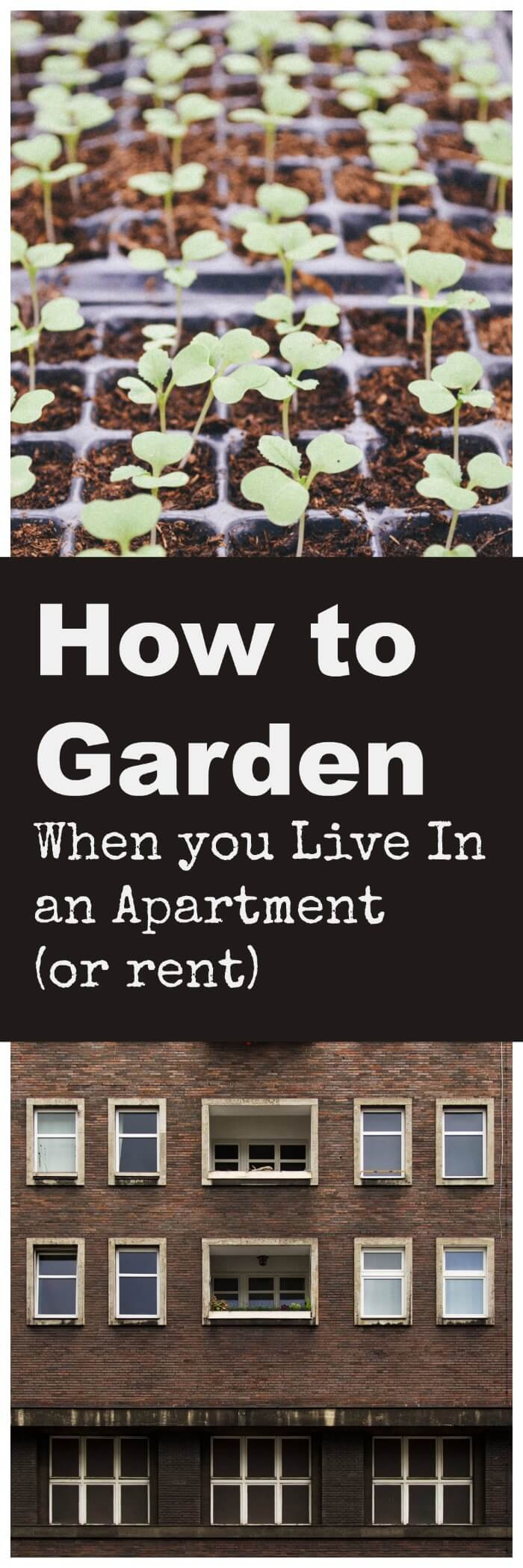 how-to-garden-when-you-live-in-an-apartment