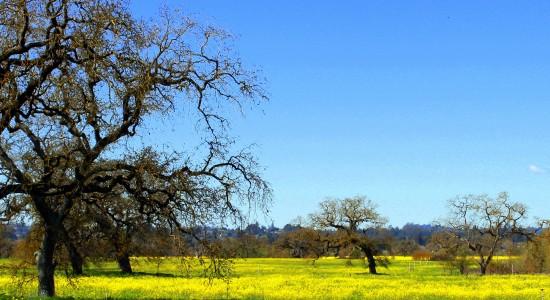 natural pollen remedy seasonal allergies