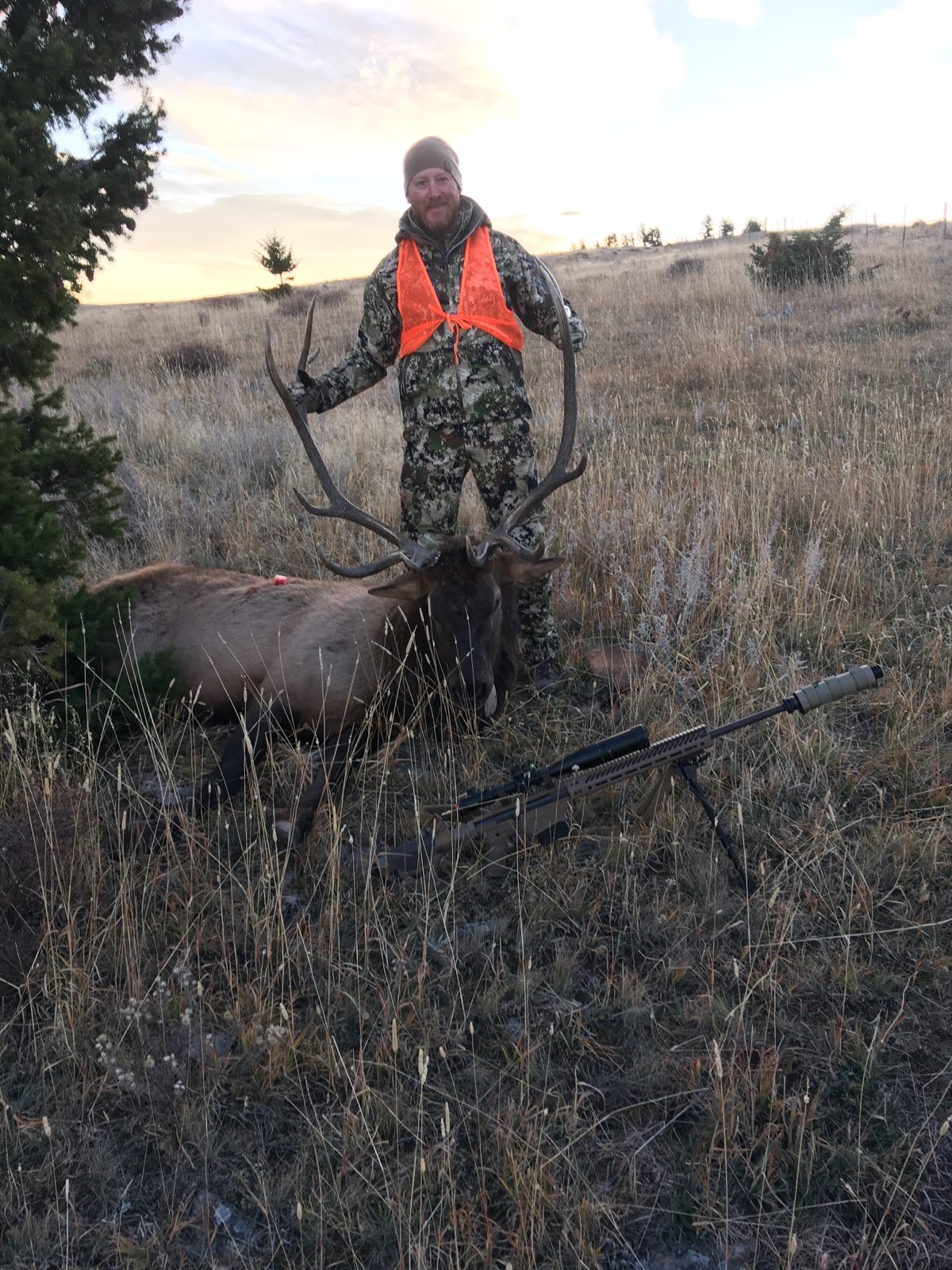 elk in montana with hunter
