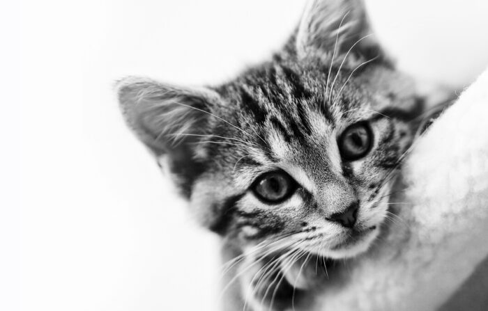 Homemade Kitten Food Health, Home